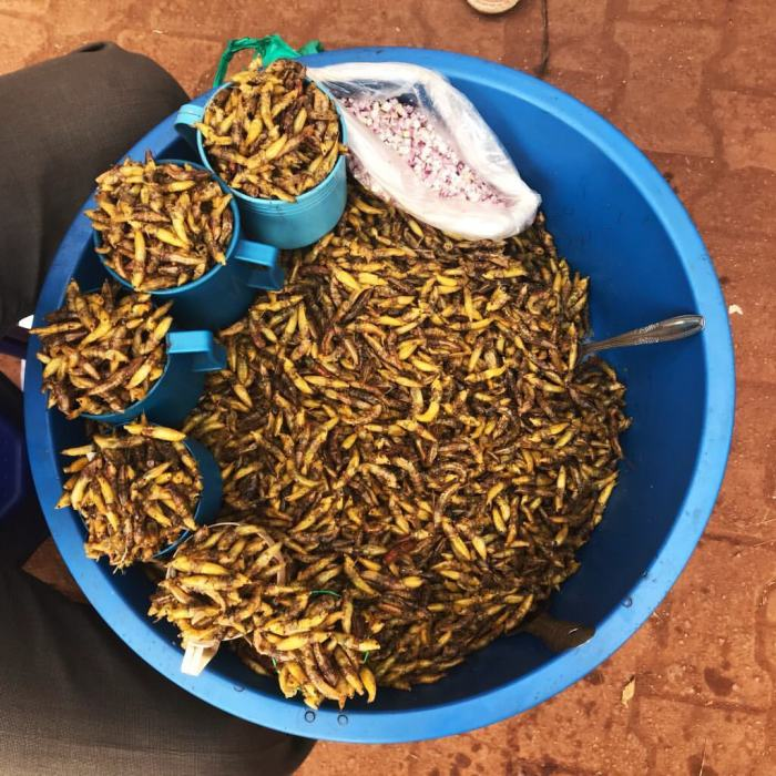 fried grasshopper in a bucket
